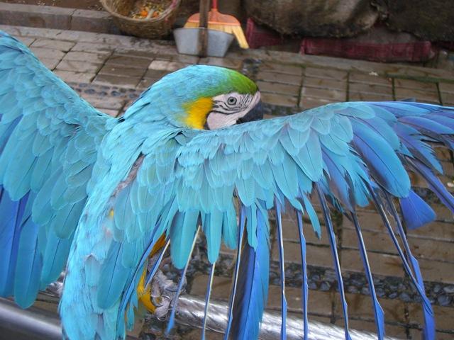 动物 鸟 鹦鹉 640