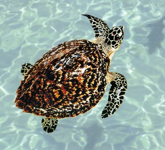 海龟是不是保护动物