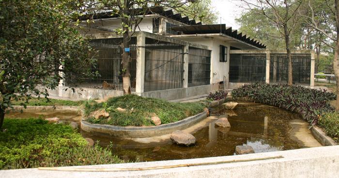 我园猩猩馆于2006年3月正式动工改造,年底正式开放。原猩猩馆只有几座破旧的铁笼展览笼,而且面积比较小,新的猩猩馆面积约3000平方米,其中园林式运动场有2000平方米,展区分为室内玻璃展厅和室外展览场两部分:室内展厅首层建有8间动物空调休息内室和2间可以零距离观察猩猩的玻璃展厅,材料采用加厚四层夹胶安全玻璃;二层观景台为游客提供在高处观察动物生活习性的新视点。景观主立面采用大型石山悬崖瀑布为主景,配置原始山林式的攀藤植物,设置原木凉棚栖架等,营造出一个生态化自然式的猩猩栖息地。园林式的动物运动场采用壕