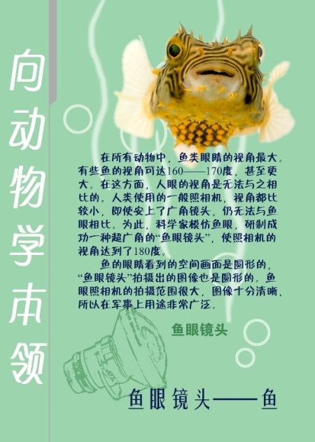 """北京动物园--""""向动物学本领"""""""