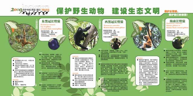 南宁动物园长臂猿保护月宣传设计展板