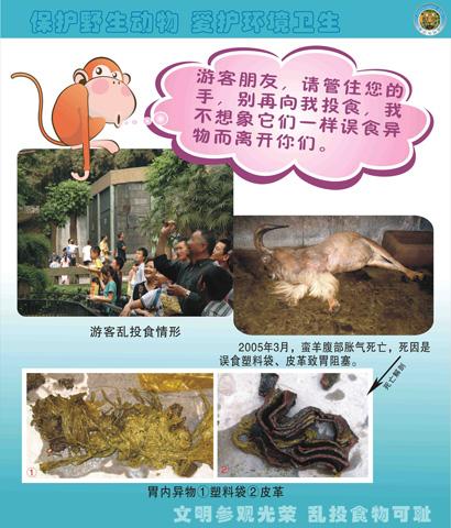 广州动物园>>重庆动物园——乱投食的危害展板