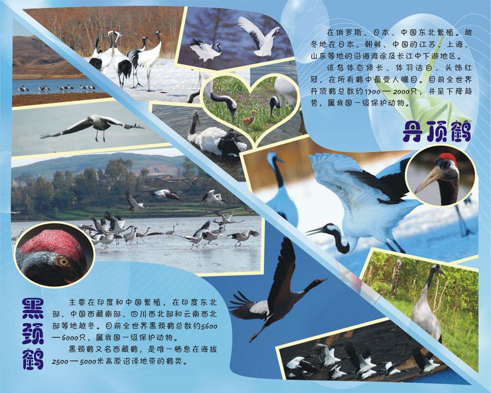 成都动物园鹤年活动展板