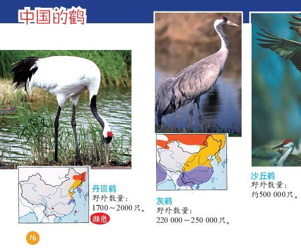 点此下载   返回 2009-03-20       广州动物园蜥蜴知识展板