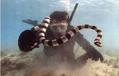 空三种最致命的蛇
