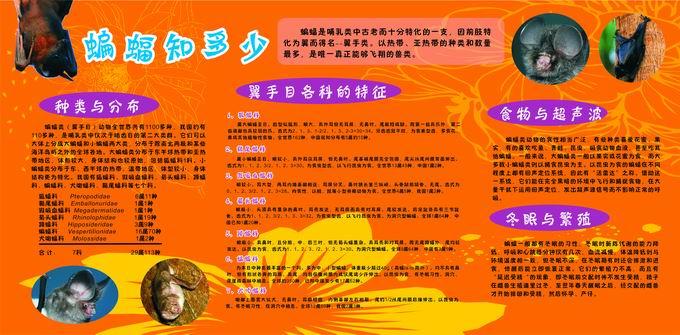 """广州动物园""""2011国际蝙蝠年""""主题展板"""