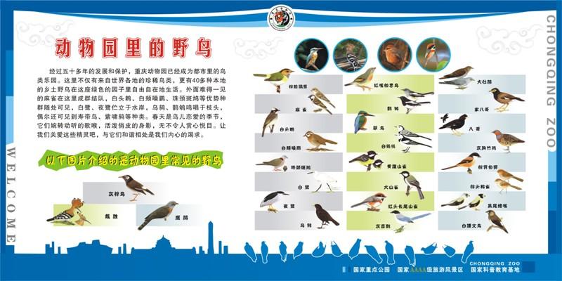 物园鸟类科普展板